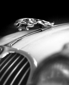Jaguar-XK-150-leaping-cat-photo-art-poster-print